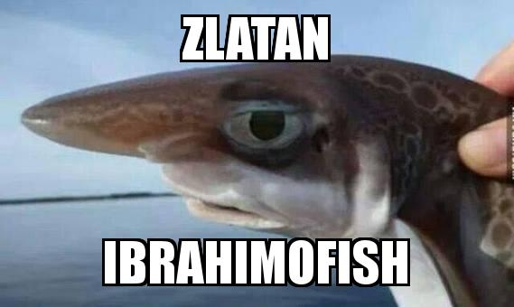 Large Nose Fish with the caption Zlatan Ibrahimofish