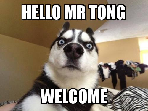 What the dog with the caption hello mr tong welcome